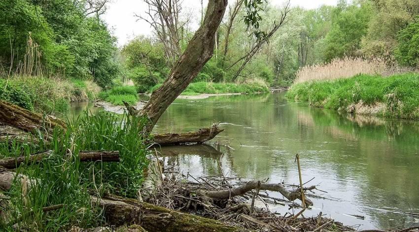 Traun-Donau-Auen - Naturschauspiel