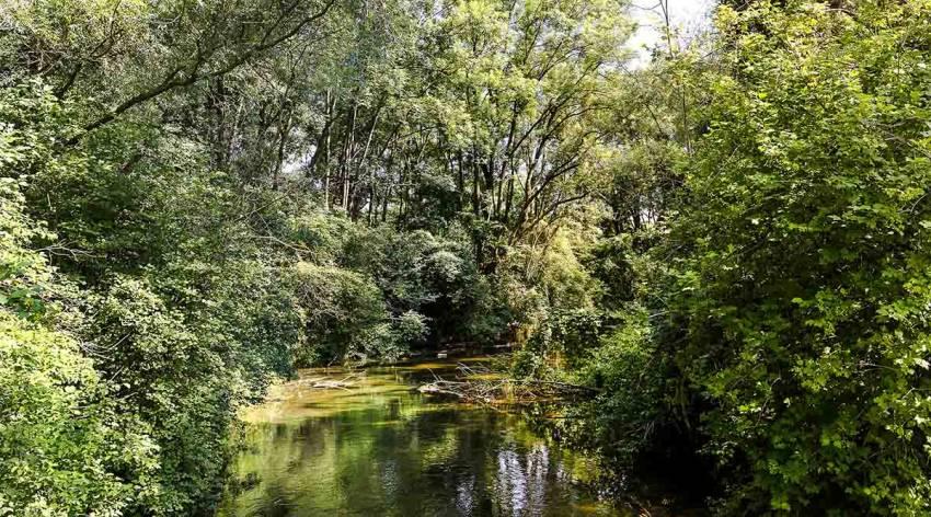 Unterwegs im Linzer Dschungel - Naturschauspiel