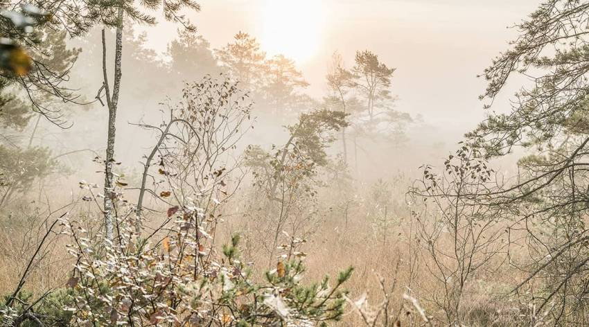 Pfeiferanger im Ibmer Moor - Naturschauspiel