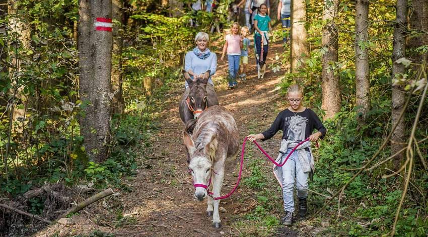 6 Esel und 7 Mühlen - Naturschauspiel