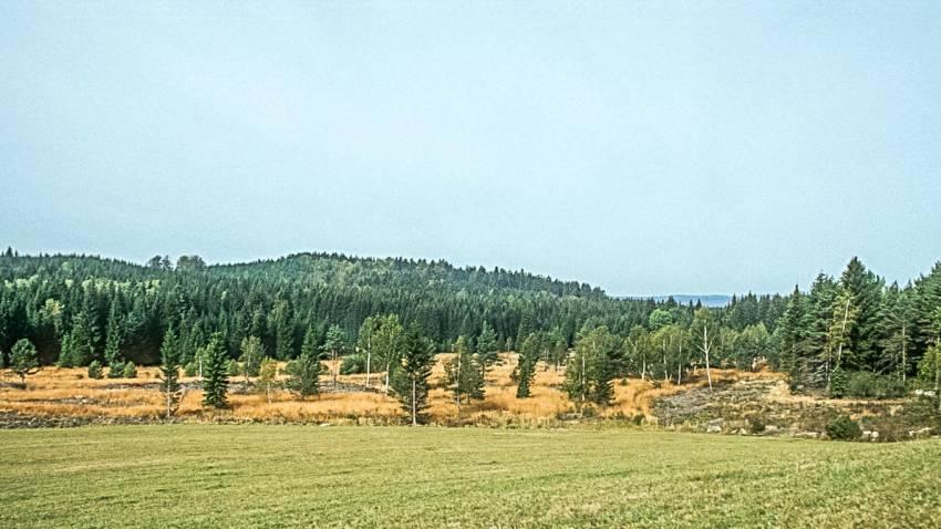 Wiesengebiete im Mühlviertel - Naturschauspiel
